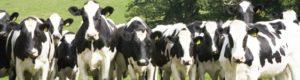 Cargill - Animal Nutrition