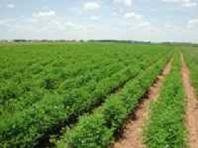 Organically farmed fields